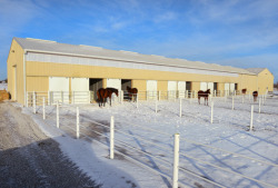 Equine Learning Center