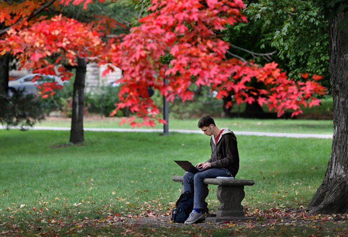 Male student studies on bench near canopy of red maple leaves