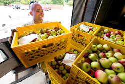 Employee unloads crates of apples