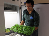 Alex Litvin holds a tray of parsley