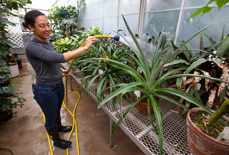 Female student Kennady Lilly waters plants in a greenhouse