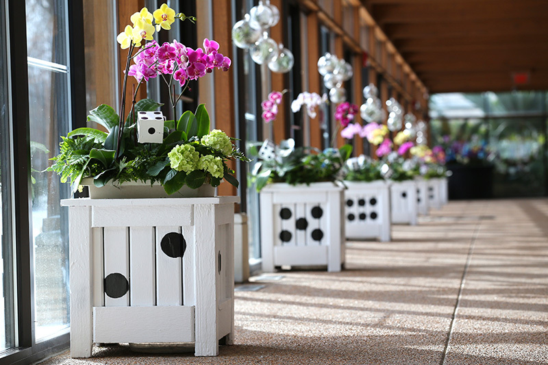 Planters decorated as dice