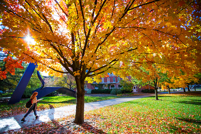 Female student walks by trees bright with gold and red leaves